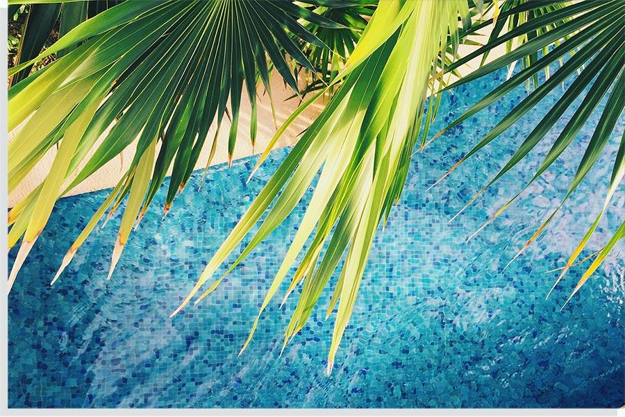 Pool mit Palmen